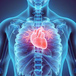 Szív- és érrendszert védő termékeink